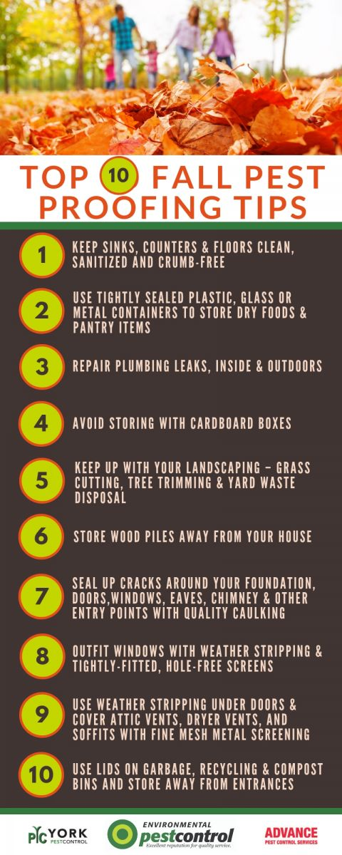 An infographic with 10 tips for DIY Fall pest proofing your home