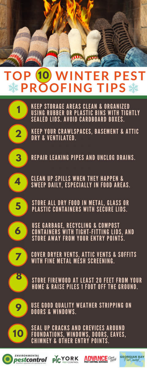 A list of 10 tips to help people pest-proof their home in the winter